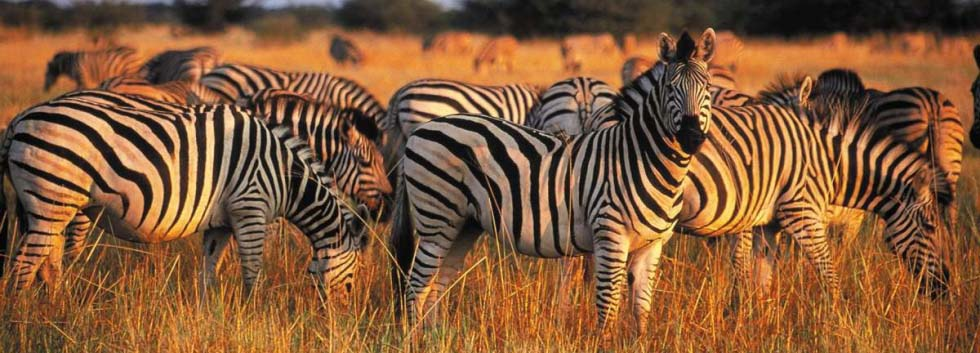 980x353_when-to-visit-the-kruger-national-park
